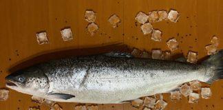 тушка лосося свежемороженая