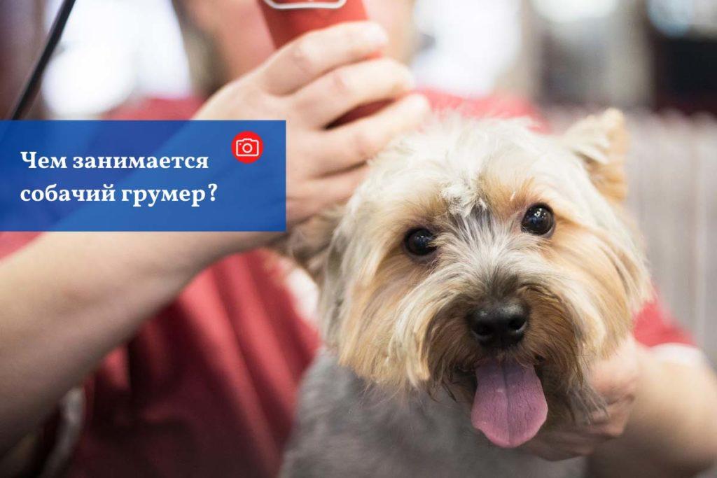 Чем занимается собачий грумер?