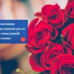 Узнайте значения различных цветов роз и подарите смысловой букет-послание