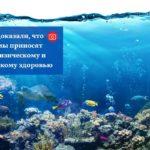 Ученые доказали, что аквариумы приносят пользу физическому и психическому здоровью