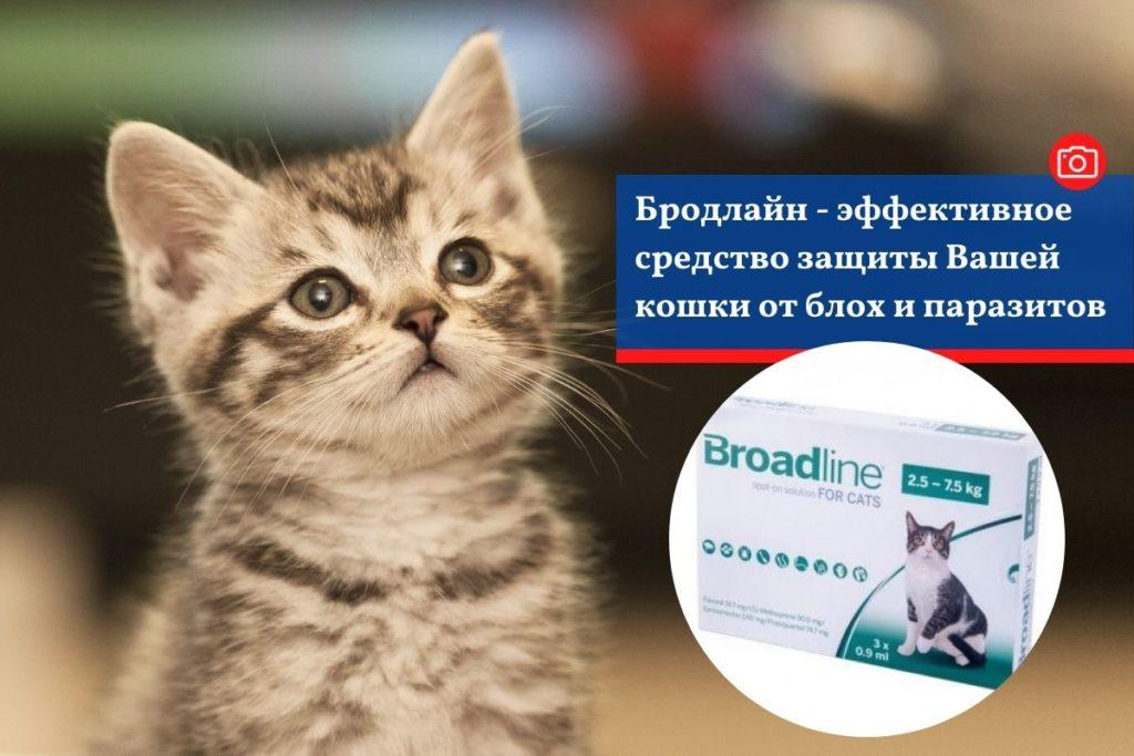 Бродлайн - эффективное средство защиты Вашей кошки от блох и паразитов