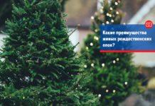 Какие преимущества живых рождественских елок?