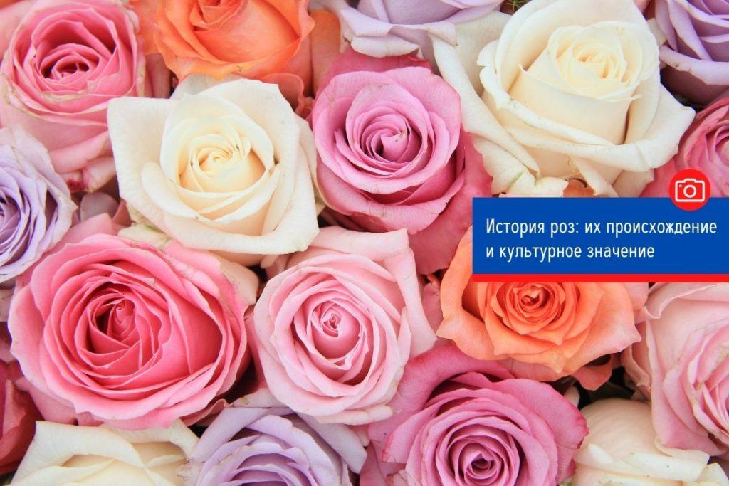 История роз: их происхождение и культурное значение