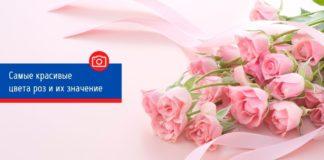 Самые красивые цвета роз и и их значение