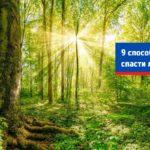 9 способов спасти леса